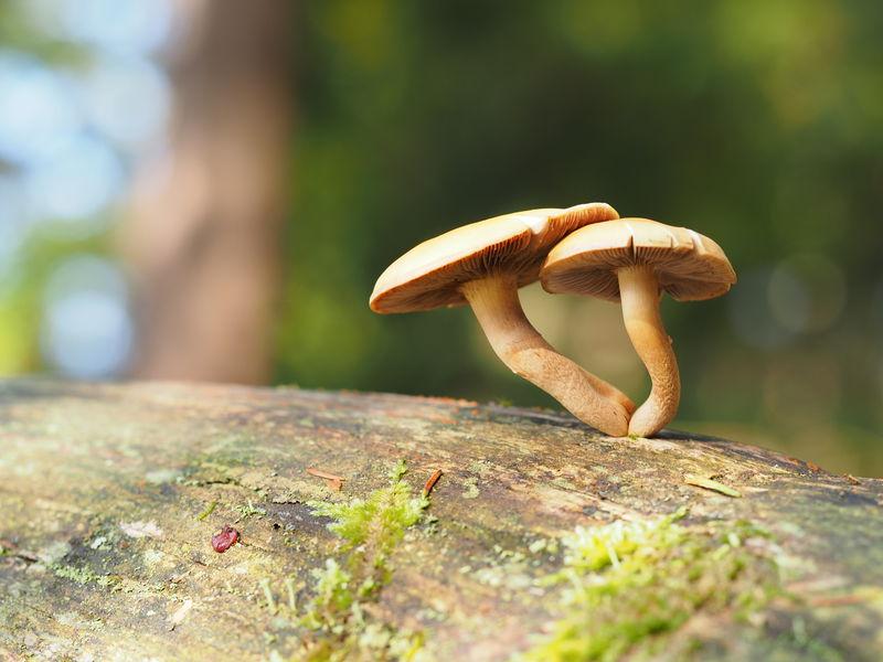Vielen Dank an Michael Meyer , flickr